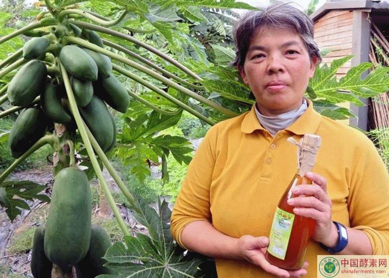 她选用的是新品种木瓜「红妃」
