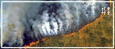 震惊!亚马逊雨林持续三周大火,我们居然一无所知?!