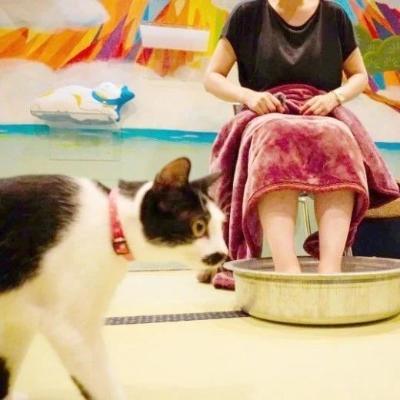"""大阪这家全是猫咪的""""澡堂"""",到底是来泡猫还是泡澡哇~~"""