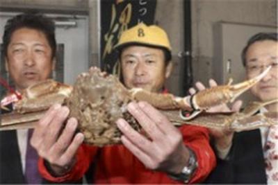 日本螃蟹500万 史上最贵天价螃蟹竞拍出炉