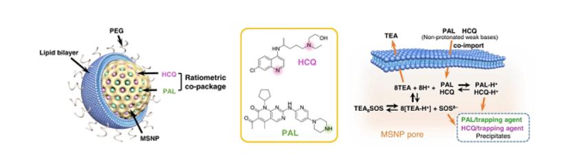 纳米药物在胰腺癌免疫治疗领域取得进展