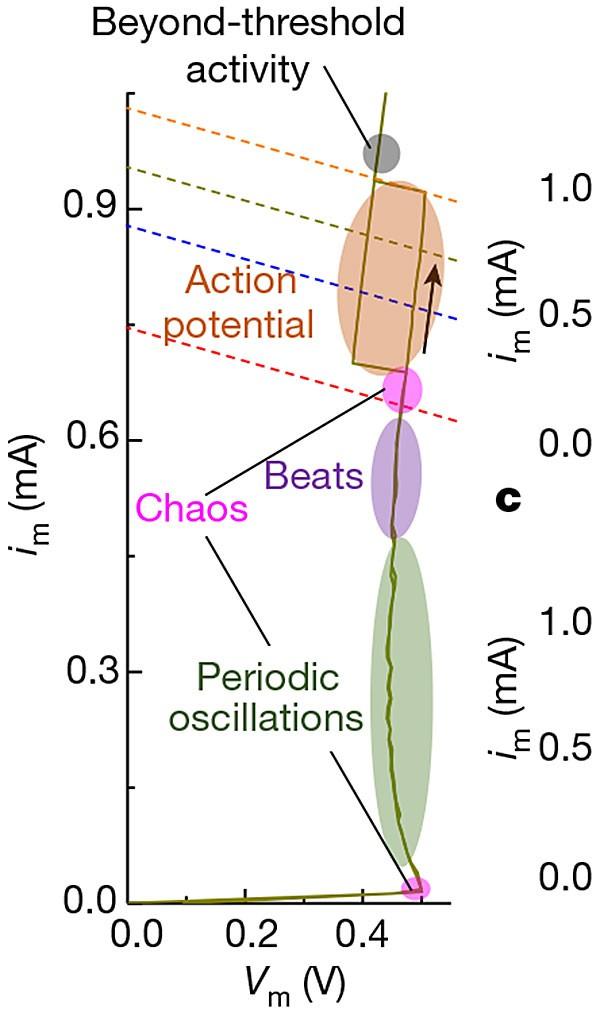 忆阻器突破:首个像神经元一样起作用的电子器件