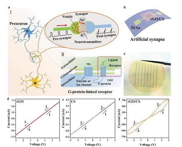 rGO/CS构成的双层结构忆阻器柔性仿生人工突触及其基本突触性质