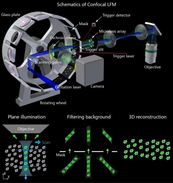 新型光场显微镜高速记录大脑神经元活动和血流的快速动态变化