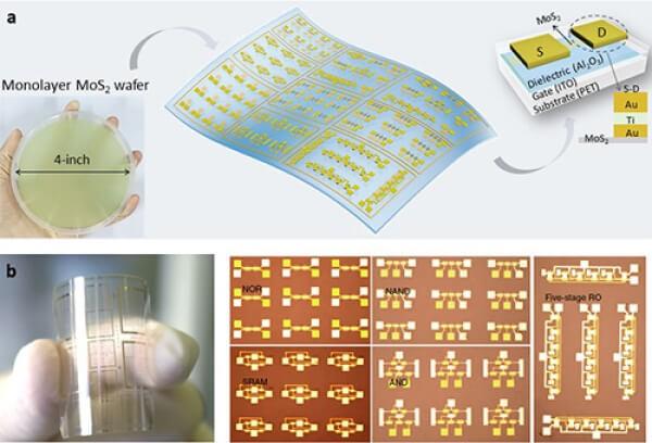 大面积二硫化钼柔性晶体管与柔性逻辑器件集成