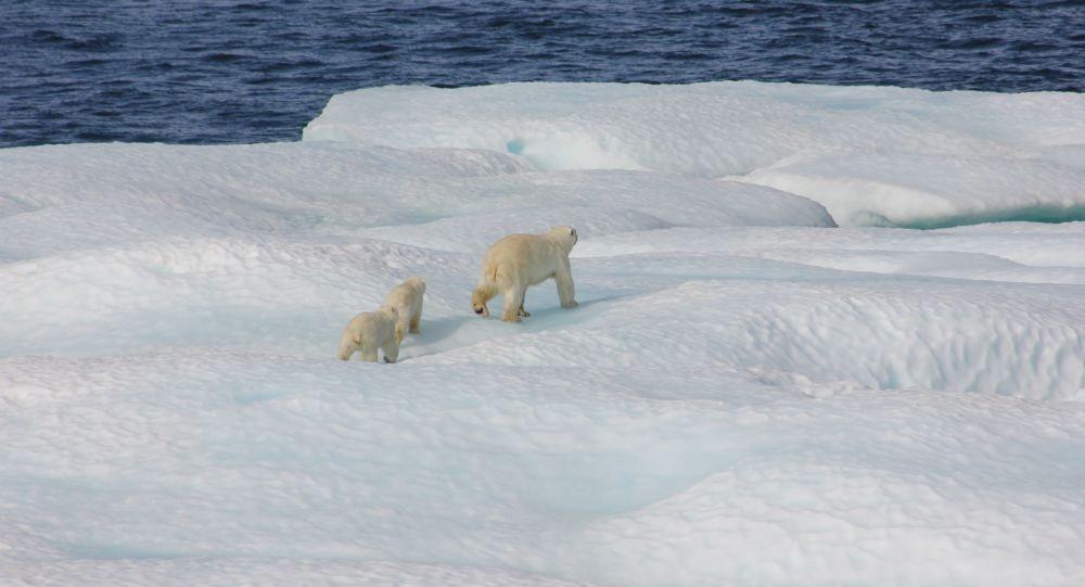 科学家记录下北极近3000年来前所未有的变暖