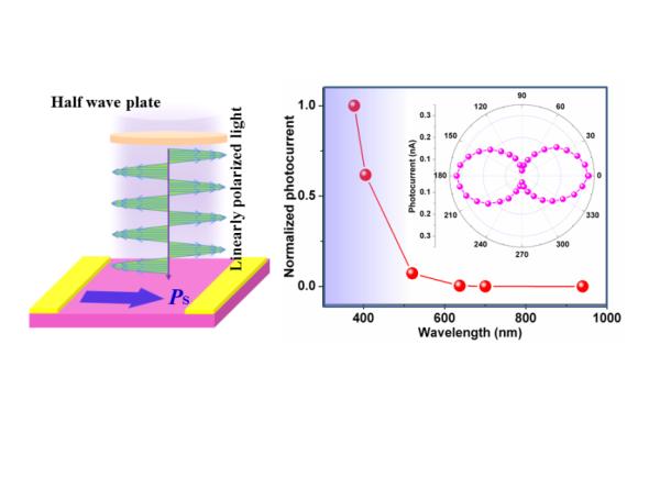 福建物构所自驱动紫外偏振光探测的光铁电体研究获进展