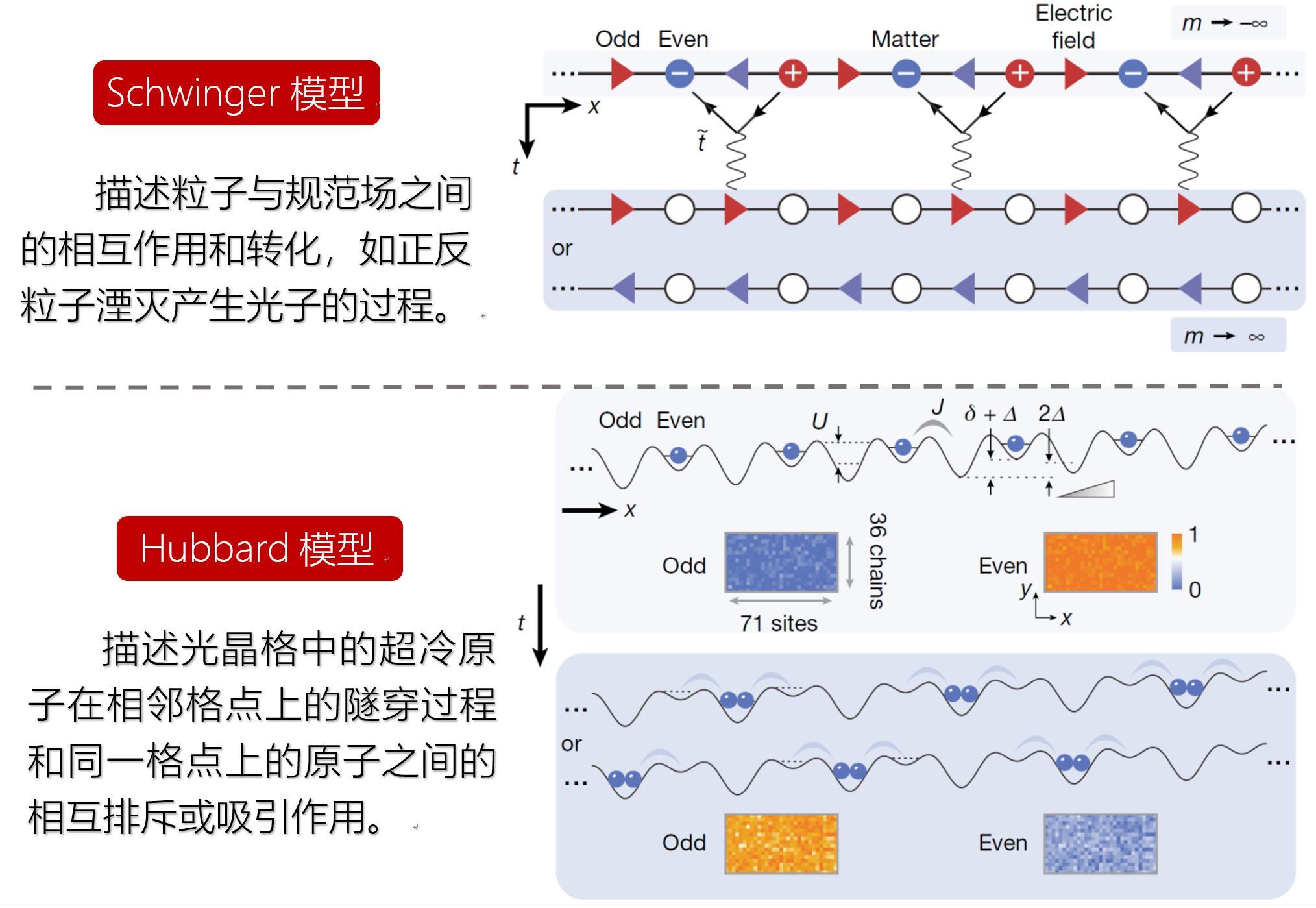 量子计算和量子模拟研究获重要突破:中国科大在71个格点的超冷原子量子模拟器中成功求解施温格方程