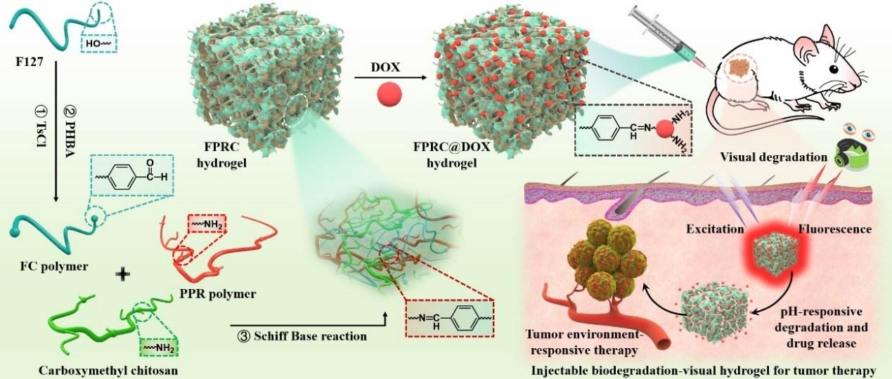 科研人员开发出新型柠檬酸基生物活性水凝胶材料